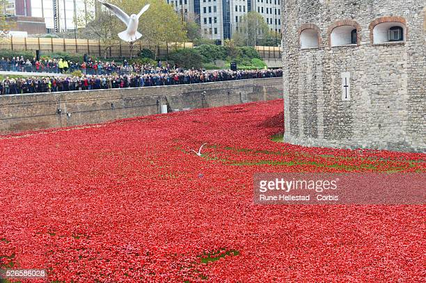 Paul Cummins 888,246 ceramic poppies are displayed at the Tower Of London to commemorate the WWI centenary.