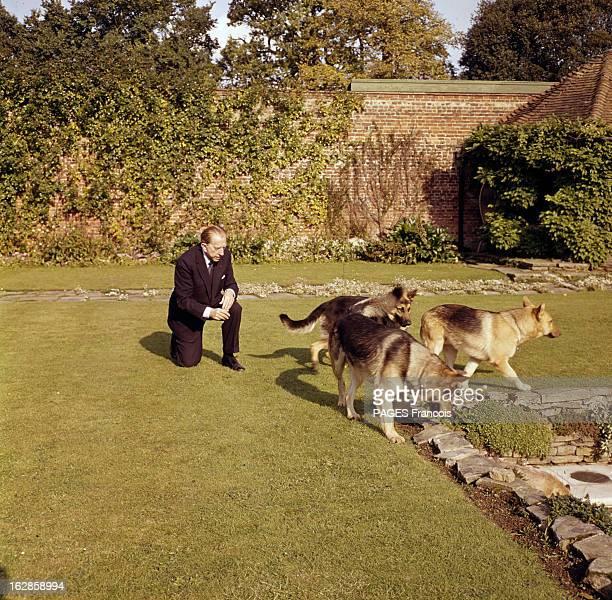 J Paul Getty en costume cravate sur une pelouse en compagnie de ses trois chiens berger allemands