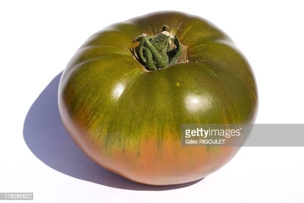 Paul Roberson tomato on August 2009 in Conservatory of Tomato, Castle de la Bourdaisiere, Montlouis sur Loire, France. Conservatory of Tomato Grows...