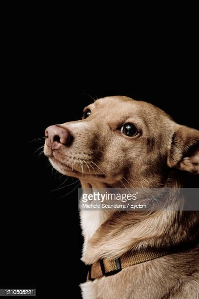 paul the dog - animal whisker stock pictures, royalty-free photos & images