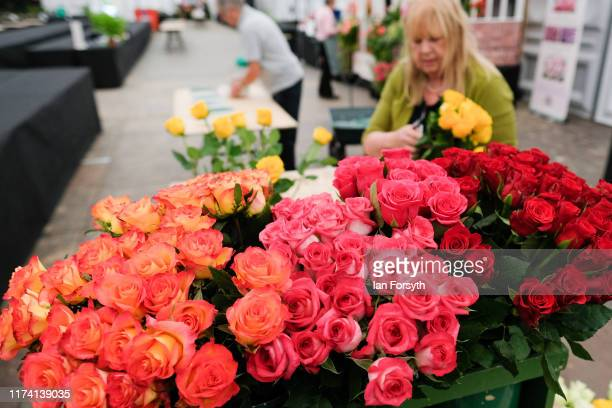 Pauline Martin from Felixstowe arranges a display of roses during staging day for the Harrogate Autumn Flower Show on September 12 2019 in Harrogate...