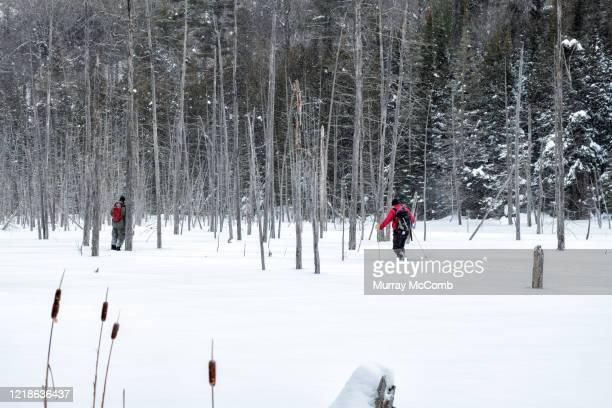 pausing to take bearings while on a snowshoe adventure - murray mccomb stock pictures, royalty-free photos & images