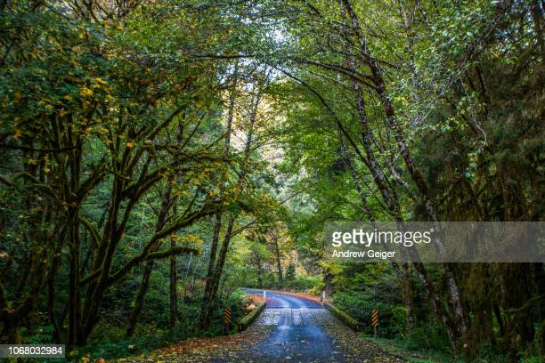 POV of paved road and bridge running through moss covered trees in lush forest with autumn golden and red Maple Tree leaves on ground.