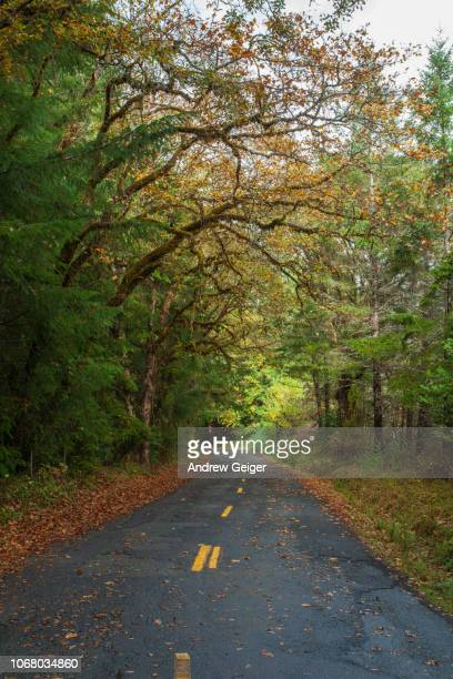 POV of paved road running through moss covered trees in lush forest with autumn golden and red Maple Tree leaves on ground.