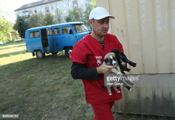Pavel 'Pasha' Burkatsky a professional dog catcher from Kiev releases stray puppies that have been neutered and vaccinated inside the exclusion zone...