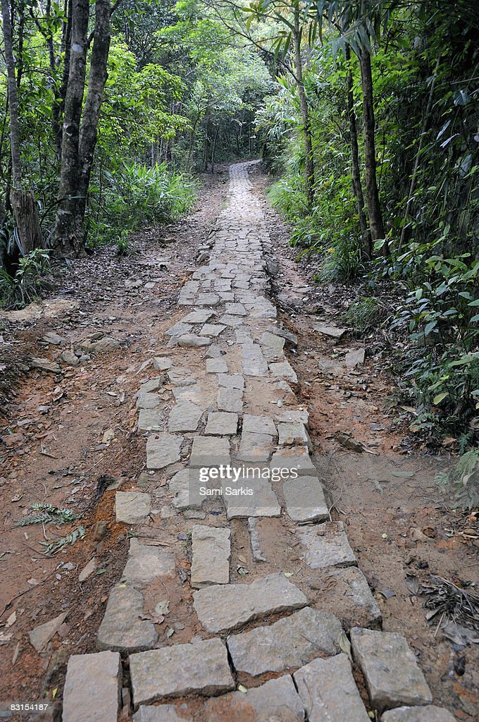 Pavement on trail in forest : Stock Photo