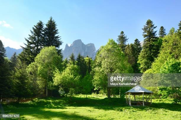 Pavilion in a springtime forest