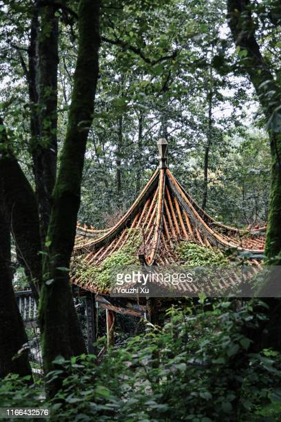 pavilions in the forest - south china stock pictures, royalty-free photos & images