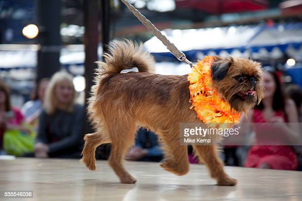 Paw Pageant dog show at Spitalfields Market London Local people enter their dogs into the Shoreditch Unbound Festival Dog Show to win prizes and to...