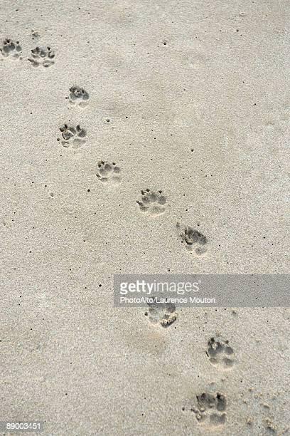 Paw prints on sand