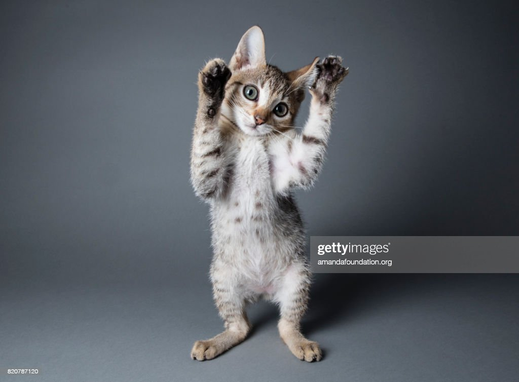 Paws in the Air - The Amanda Collection : Stock Photo