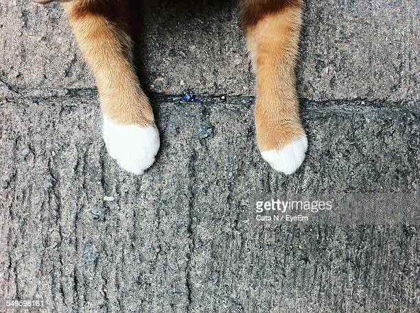 Paws Of Cat On Stone