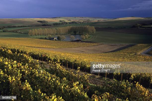 paysage de vignes en automne et paysage agricole