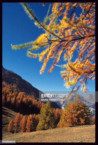 Paysage du Queyras en automne HautesAlpes