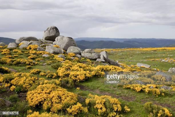 paysage - lozère - mont lozère - languedoc rousillon stock pictures, royalty-free photos & images