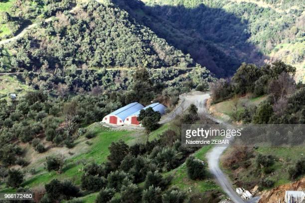 Paysage près de Ait Hammam en Kabylie l'endroit où a été retrouvé le corps d'Hervé Gourdel le 16 janvier 2015 Kabylie Algérie