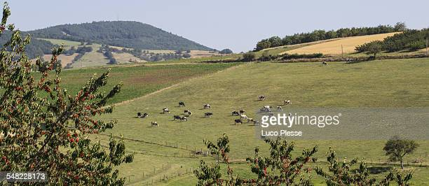 Paysage Sud Est de la France - Rhone Alpes