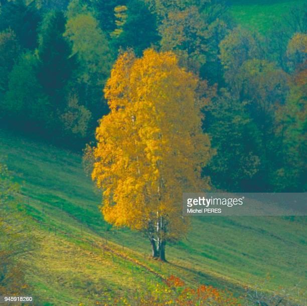 Paysage typique des Vosges Alsaciennes Paysage typique des Vosges Alsaciennes