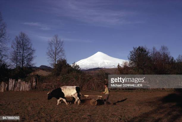 Paysan dans son champ dans la région de Lican Ray devant le volcan Villarrica en novembre 1971 Chili
