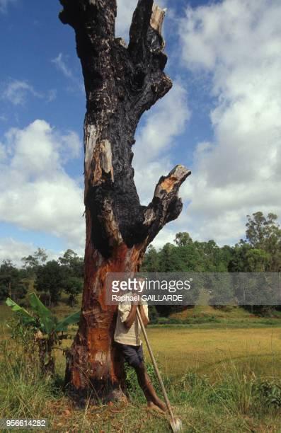 Paysan malgache devant un tronc d'arbre noirci par le feu avril 1992 Madagascar
