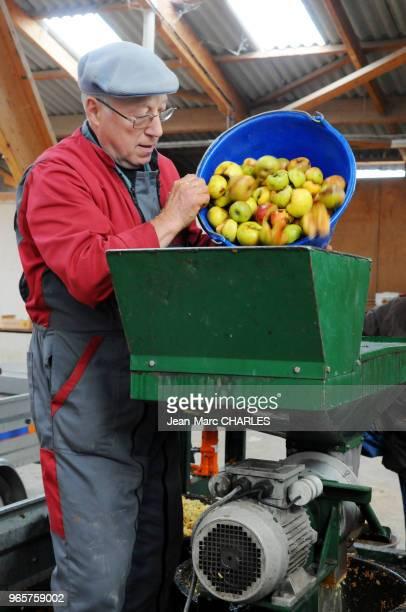 Paysan passant la récolte des pommes dans une broyeuse pour la fabrication du jus de pommes dans l'Aveyron le 27 octobre 2017 France