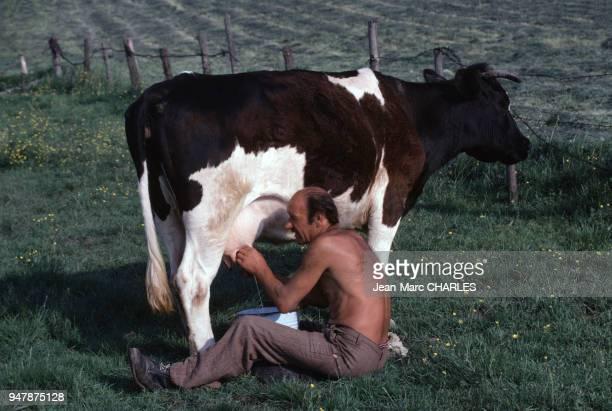 Paysan trayant une vache près de Gizycko en juin 1979 Pologne