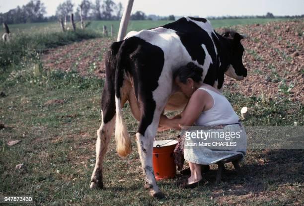 Paysanne trayant une vache près de Gizycko en juin 1979 Pologne