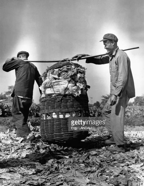 Paysans dans un champ près de Pékin en Chine