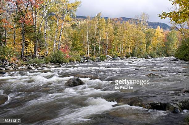 peabody river in autumn, white mountains national forest, near gorham, new hampshire, usa - white river national forest stock photos and pictures
