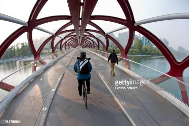peace bridge calgary - calgary alberta stock pictures, royalty-free photos & images