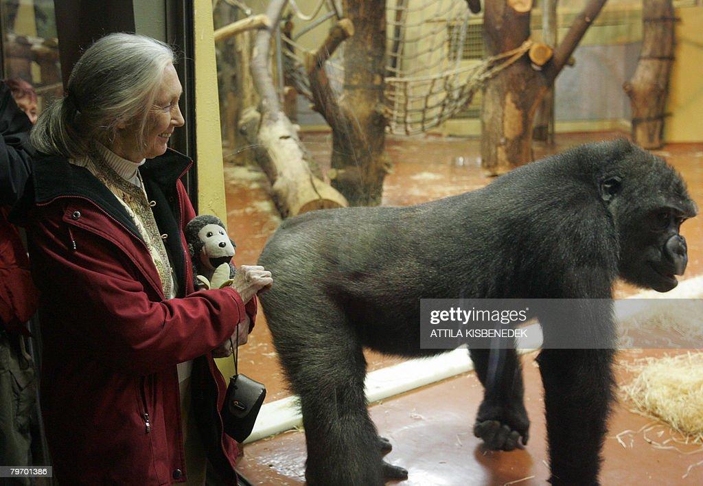 UN peace messenger and British primatolo : News Photo