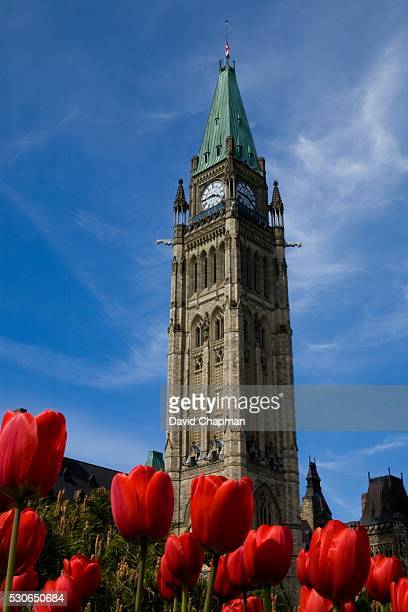 Peace Tower framed by tulips, Parliament buildings, Ottawa, Ontario, Canada