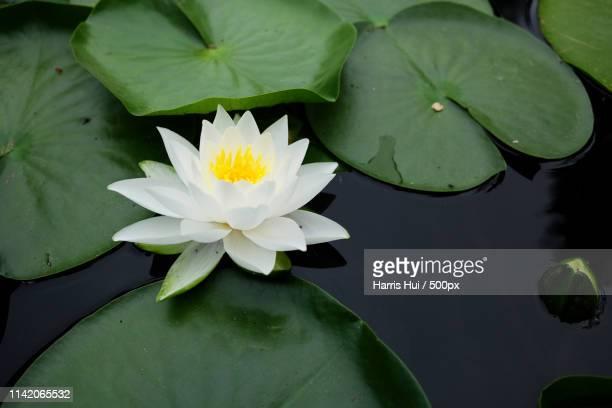 peace - van dusen sx5 - lily harris photos et images de collection