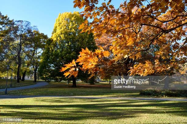 peaceful beautiful morning public park city