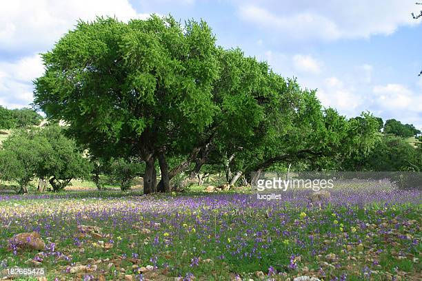 peaceful countryside - argan tree stock pictures, royalty-free photos & images