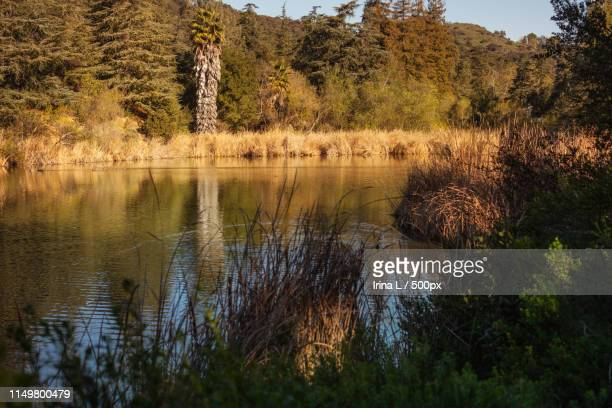 peaceful franklin canyon hike in beverly hills, california the park comprisesacres, and is - スタジオシティ ストックフォトと画像