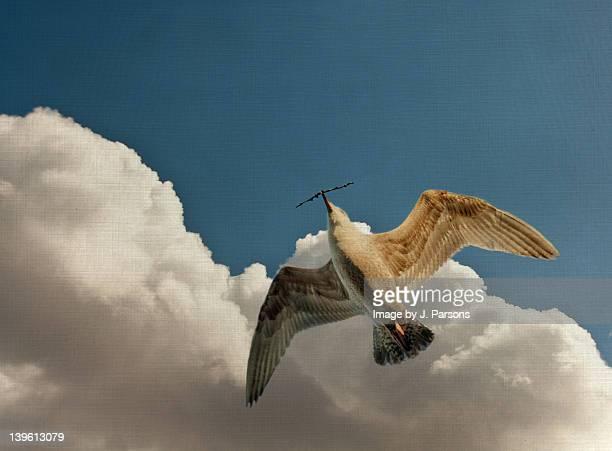 Peaceful gull