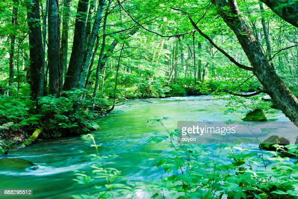 peaceful mountain stream scene in japan - spring flowing water stock pictures, royalty-free photos & images