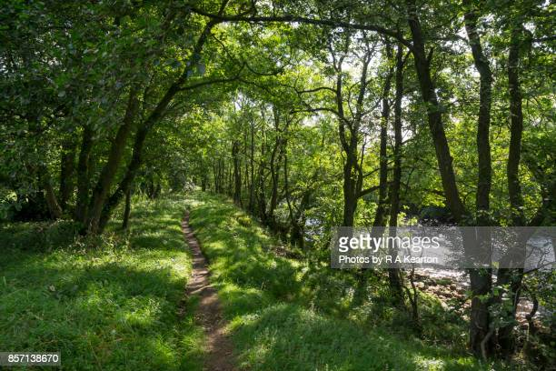 Peaceful path beside the river Swale, Yorkshire Dales, England