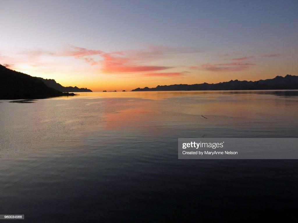 Peaceful Sunrise Bird Flight : Stock-Foto