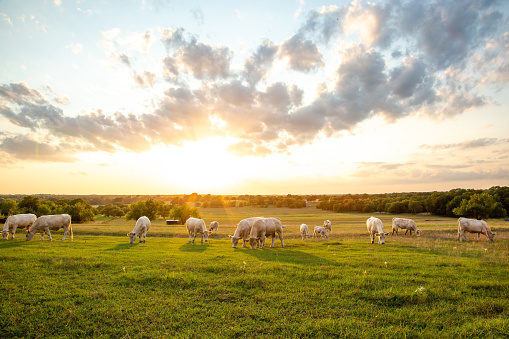 Peaceful Sunset on Texas Ranch - gettyimageskorea