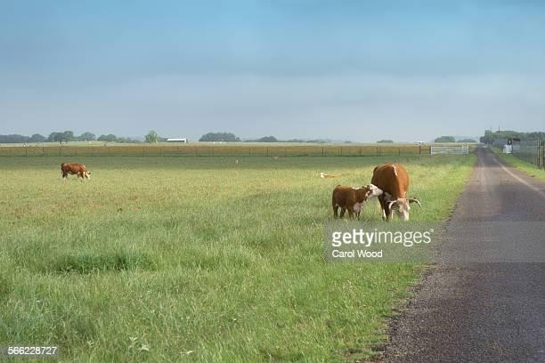 Peaceful Texas ranch