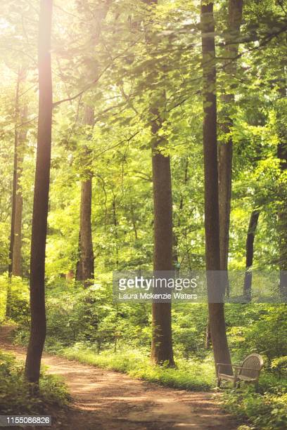 peaceful walk in the woods - laura woods stock pictures, royalty-free photos & images