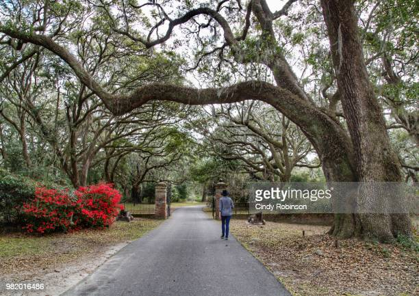 peaceful walkway - southeast stock pictures, royalty-free photos & images
