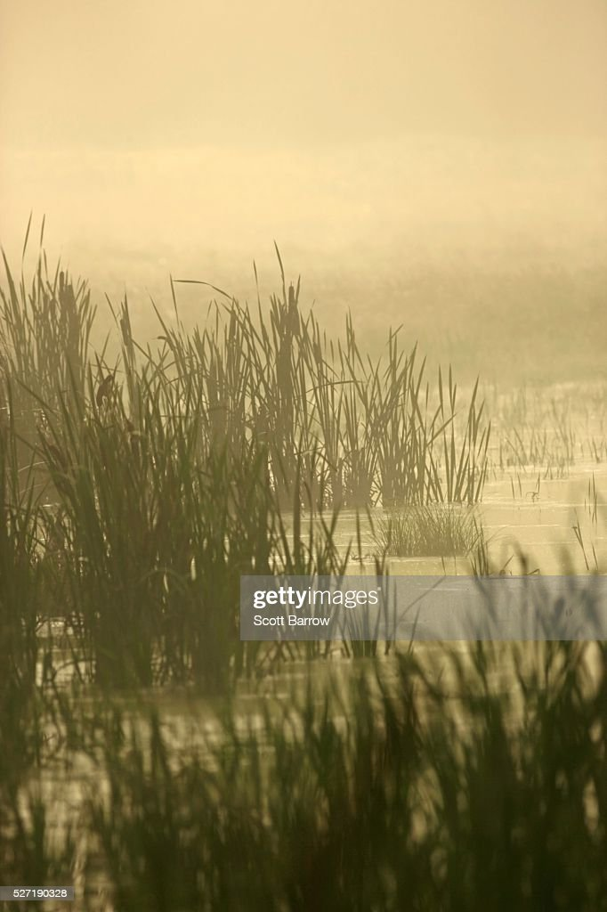 Peaceful wetlands : Stock-Foto