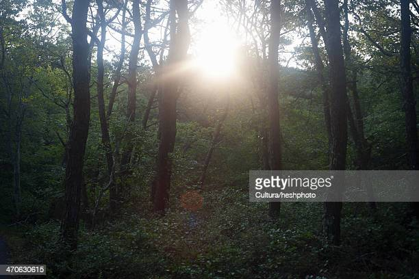 peaceful woodland scene at sunset - heshphoto stockfoto's en -beelden