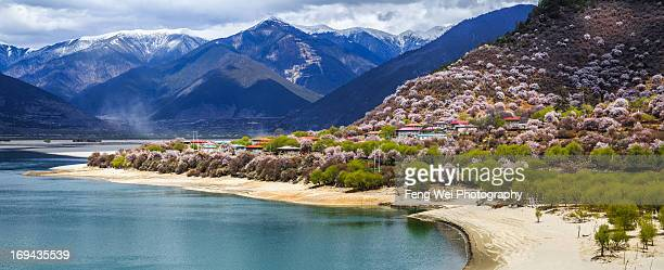 peach blossom, nyingchi, tibet - peach blossom stock pictures, royalty-free photos & images