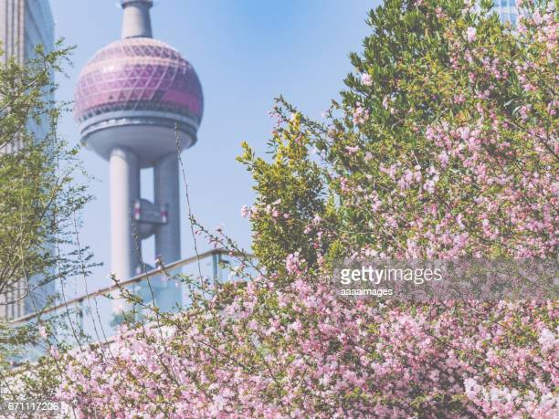 peach blossom with urban architecture