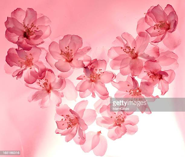 peach flowers arranged in a heart shape - mamigibbs stock photos and pictures