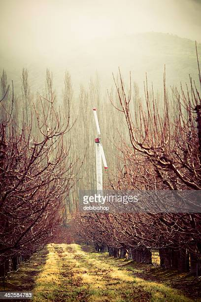 Peach or Apple Orchard Fan Foggy Weather in Washington State
